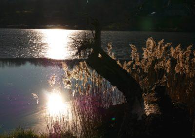 Lac de Menet - 2017
